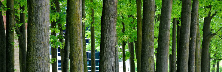 Zmiana przepisów dotyczących usuwania drzew i krzewów