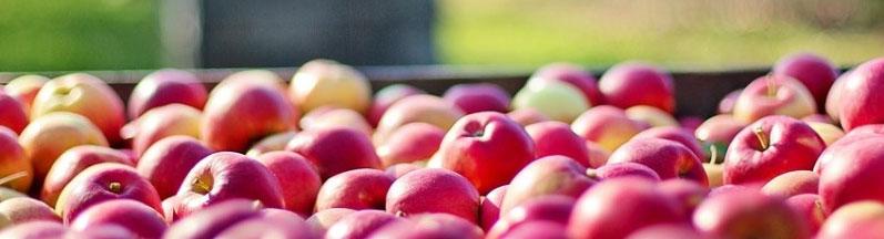 Kolejna dostawa jabłek dla Gminy Dobroszyce