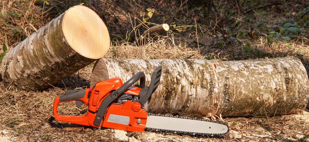 Wycinka drzew na własnej działce wymaga zgłoszenia !!!