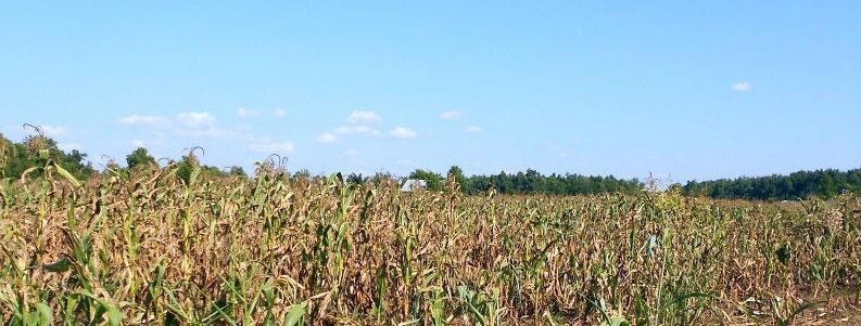 Szacowanie strat w uprawach rolnych